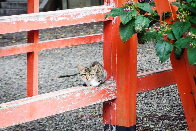 Today's Cat@2015-08-19
