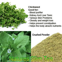Chickweed Tea is great for the whole body (Natures SlimTea) Tags: naturalbeauty herbaltea chickweed oolong healthyeating puerh oolongtea puerhtea healthyliving clearskin smoothskin myhealth slimmingtea beautifulskin goodskin healthyheart healthylife greenteaextract healthymind healthybody naturalskin weightlosstea herbalweightloss slimtea bodyhealth youngskin drinkjuice chickweedtea garciniacambogiaextract youthfullskin
