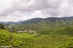 Cameron Highlands! (mahernaamani) Tags: hot green love nature clouds canon landscape photography highlands natural cloudy tea farm lifestyle highland cameron malaysia boh   6d  cameronhighland      canon6d    bohteafarm