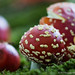 """2015_Champignons_Tervuren-56 • <a style=""""font-size:0.8em;"""" href=""""http://www.flickr.com/photos/100070713@N08/21217791034/"""" target=""""_blank"""">View on Flickr</a>"""