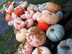 pastel pumpkins (stansvisions) Tags: fall catchycolors virginia pastel pumpkins adifferentpointofview commonwealthofvirginia stansvisions
