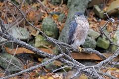 6N1A2105 (onegreatcity55) Tags: canada nature canon wildlife manitoba gimli assiniboinepark oakhammockmarsh lakewinnipeg ftwhyte