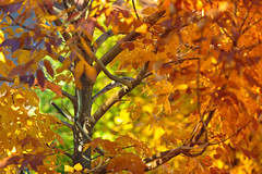 Autumn Madness (c_slavik) Tags: autumn orange sun sunlight fall nature beautiful beauty season outdoors colorful mood nj breeze northeast