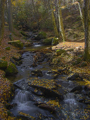 Puerto de Canencia HDR 01 -W (Daniel Rocal) Tags: madrid autumn naturaleza musgo verde green fall nature water leaves yellow ro forest river hojas moss woods agua amarillo bosque vegetation otoo arroyo canencia naturalezacautivadora danielrocal