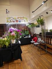 P1100049 (cieneguitan) Tags: flora lan bunga orkid flowershow okid angrek anggerek