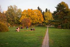 DSC02249 (Бесплатный фотобанк) Tags: детскаяколяска желтыелистья женщинасколяской лесопарк опавшиелистья осень отдыхнаприроде парк солнце россия москва