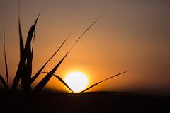 Sunset (Virgen photography) Tags: sunset summer sky sun nature grass canon lithuania followme naturelover 2015 zarasai natureandnothingelse virgenphotography