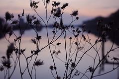 sunset (Greta Parisini) Tags: sunset italy flower colors nikon tramonto autumncolors lidi comacchio valli giornate d90 maredinverno lidodegliestensi gitedomenicali