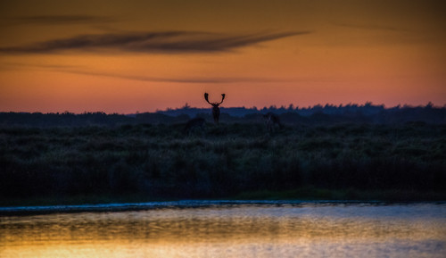 Deer Enjoying the Sunset