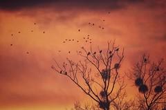 I still believe in fairytales (***étoile filante***) Tags: birds vögel tree baum sky himmel clouds wolken sunset light licht emotions poetic poetisch soulful fairy fairytale märchen sonnenuntergang evening abend winter nature natur