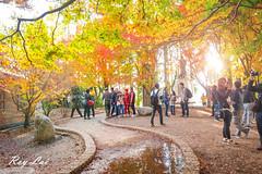 IMG_1655 (CBR1000RRX) Tags: 650d canon taiwan travel tourist landscape maple leaf autumn