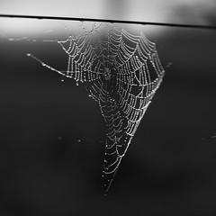 Spiderman was here (Budoka Photography) Tags: blackandwhitephotos manual monochrome manuallens manualondigital bokeh bw blackandwhite outdoor nature canonllens canonfd50mmlf12