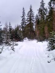 Одного взгляда на карту достаточно, чтобы понять, что на север и запад от края дороги простираются обширные заболоченные земли и непроходимые леса. Но мы пошли!
