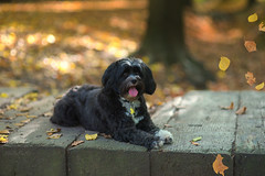 Best Friends.... Family.... (KissThePixel) Tags: dog love autumn leaves leaf red october bokeh realbokeh softbokeh family k9 dogs dogphotography seasons funny