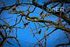 DSC00113 (ioner209) Tags: birds tree trees clearskies breakintheweather
