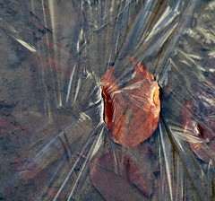 when puddles turn solid ... (Edinburgh Nette ...) Tags: redmoss january17 puddles ice abstracts leaves beech fagus sylvatica reflections