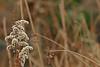 saturday photography (dr.larsbergmann) Tags: nature outdoor flowers flora languageofflowers flower flowerscolors canon eos 70d bokeh