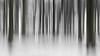 Forest Barcode (Eric Spies) Tags: reichswald forest wald winter schnee bäume trees januar january kalt cold frost fujifilm xt10 fujinon xc 1650 kleve cleve niederrhein nrw nordrheinwestfalen deutschland germany materborn xc1650 blur blurred intentional intentionalcameramovement camera movement icm barcode strichcode strichkode abstrakt abstract snow