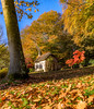 Gingerbread house amongst the trees (Anthony White) Tags: stourton england unitedkingdom gb gingerbreadhouse wiltshire autumn natureal redmaple cottage thatchedroof golden yellow sony history walk paisaje smoke