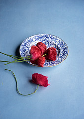 Poppy (borealnz) Tags: plate mintonseaweed antique old blueandwhite china poppy red flowers