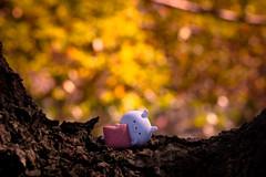 Shiroyama park / Canon EOS60D:Canon EF-S60mm F2.8 Macro USM (telenity) Tags: japan tateyama usamaru shiroyama canon cute eos60d 日本 館山 うさまる 城山 公園 可愛い かわいい
