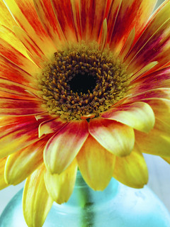 Flower Study 93
