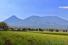 Sugar cane fields & Volcanoes, El Salvador (ssspnnn) Tags: izalco ilamatepec volcandesantaana vulcoes volcanoes volcanes elsalvador vulcao paisagem landscape canoneos70d spnunes nunes snunes spereiranunes