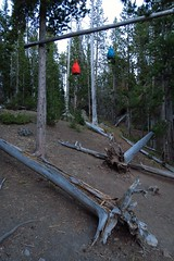 Food hanging in Yellowstone National Park