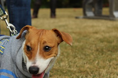 """Dogs, dog park, richmond • <a style=""""font-size:0.8em;"""" href=""""http://www.flickr.com/photos/31682982@N03/21902778693/"""" target=""""_blank"""">View on Flickr</a>"""