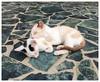 Sleeping Kittens (d-harding) Tags: sleeping apple nature animals cat kitten sleep kittens malaysia kotakinabalu iphone 5s putatan snapseed iphone5s