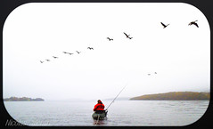 Fly me to the Moon (Nicolas Valentin) Tags: uk scotland flying geese fishing scenery aqua kayak alba goose loch lochlomond ecosse