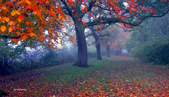 Natures Trail to School (Terry Kearney) Tags: park november flowers autumn trees england plants mist plant tree nature weather fog rural forest port canon landscape daylight europe flickr day cheshire outdoor wildlife parks foliage explore fields serene oaktree bushes kearney wirral 2015 naturestrail november2015 whitbypark oneterry canoneos1dmarkiv terrykearney ellesmereportcheshire autumn2015 littlestanneycheshire cheshire2015