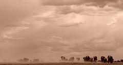 March of the Elephants - Etosha National Park