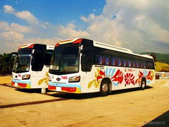 New GL TRANS Kia Granbird Sunshine (JanStudio12) Tags: new flower bus sunshine airconditioned kia trans gregory pinoy cordillera solid fanatic gl pbf livery lizardo granbird janstudio12