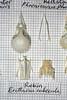 Robin (JRochester) Tags: robin skeleton bones bone pelvis sternum skulll rubecula erithacua