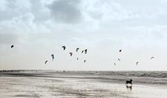 Dnemark - Rm - Kite - Surfen 2 (Pana53) Tags: sky clouds nikon wasser waves wind outdoor himmel wolken dnemark danmark wellen lichtschatten salzwasser nikond810