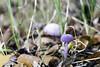 IMG_3068-Modifier (mycenium) Tags: wood mushroom canon belgium region foret brabant champignon bois 6d wallon wallonie wallone belgiquie