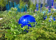 Blue globe nestled in the green (Ruth and Dave) Tags: seattle blue sculpture plants green chihuly art glass garden globe sphere installation seattlecenter chihulygardenandglass