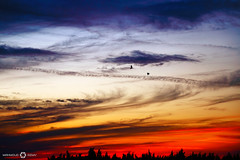 Goodbye (m.3zmy) Tags: sunset sky cloud birds colours outdoor