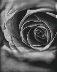 Non ti lascerò sola in questo bianco e nero. Il paradiso degli orchi , Daniel Pennac (thescourse) Tags: bw macro rose canon ma petals rosa bn canondslr biancoenero tamron90mm rosepetal blackandwithe tamronspaf90mmf28di11macro canoniani canonitalia macromarvels canoneos5dmkii eos5dmkii nontilasceròsolainquestobiancoenero