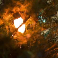 orange. (bri— hefele) Tags: christmas tree bulb lights christmastree c9