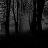 Viens, viens... (Sappho et amicae) Tags: forest sapphoetamicae željkagavrilović canon450d landscape