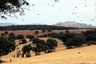 Spain Ibex Hunt & Driven Partridge Hunts 21