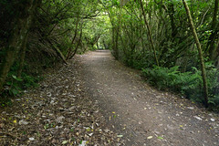 IMG_6445.jpg (Brendon & Keryn) Tags: zealandia summer newzealand northisland wellington