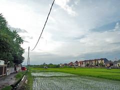 Deruralisation (Everyone Sinks Starco (using album)) Tags: denpasar bali sawah ricefields