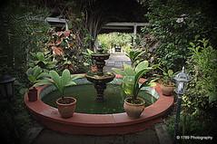 The Fountain (Rollingstone1) Tags: garden fountain plants flora nature trellis lamp flowers puertodelacruz tenerife water path