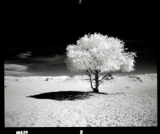 Deserted Lonesome