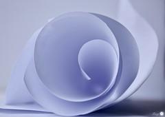 Vortex (Trayc99) Tags: white paper swirl abstract justwhitepaper macro macromondays delicate decorative depthoffield closeup minimalism