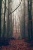 Ashridge Mist III (meniscuslens) Tags: ashridge forest wood mist fog leaves path track sun national trust buckinghamshire