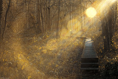 """still dreaming"" (B.Graulus) Tags: nature photography forest path sun sunset belgium flanders erpskwerps europe belgië vlaanderen europa kortenberg canon belgique belgica winter woods outdoor"